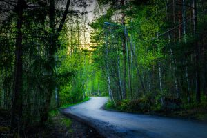 Forest road by m-eralp