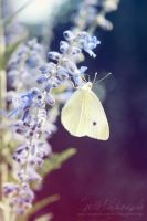 White Butterfly by Estelle-Photographie