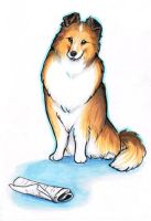 Clever Sheltie by Stormslegacy