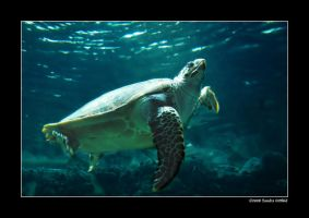 Sea turtle 2 by grugster