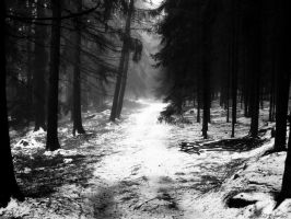 Winter forest path by PavelFireman
