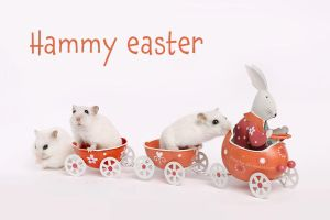Hammy Easter 2016 by hoschie
