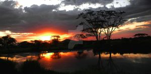 serengeti tanzania sunset by lindaatje