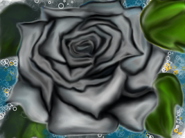 black rose by scayne