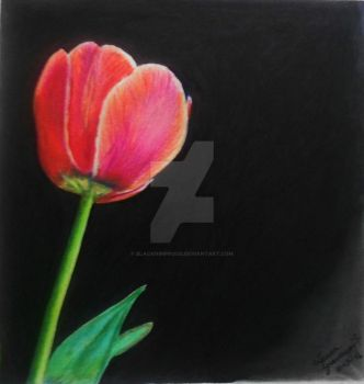The Tulip by blacknimproud
