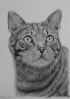 Cat drawing by Odette1994