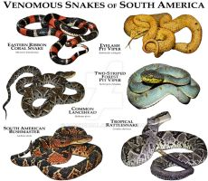 Venomous Snake of South America by rogerdhall