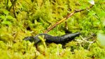 Black Slug by FROG-and-TOAD
