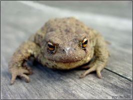 Toad II by firework