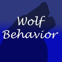 Behavior by Alpha-Wolf-Gypsy