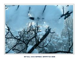 Snow Covered Branches by devildevine