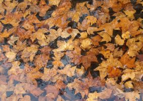 River of dead leaves by TinyWild
