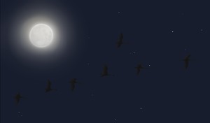 Fullmoon and flying swans by ForsakenBelf