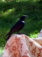 Raven on tapestry by InKi-Stock