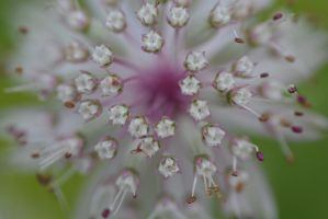 White explosion close-up by dorenna