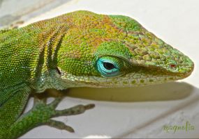 Anole by FallOut99