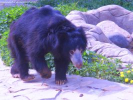A Sloth-bear by MsDeadable