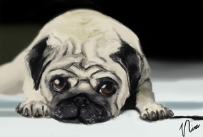 Pug by ninated