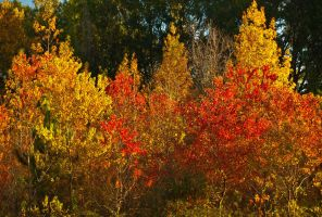 Mississippi Fall Color 1 by texasghost