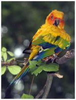Sun Conure Bird by shawn529
