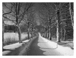 Winter Lane by Pajunen