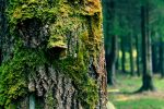 face of the tree by amelyshato