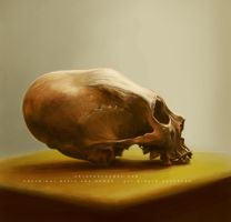 Elongated Skull II by Whiteparasite