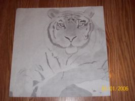 art project - Tiger by scarcrow27