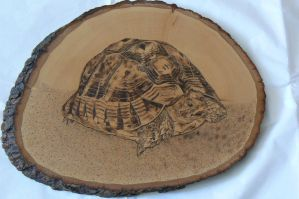 Greek Tortoise Woodburning by MontanaJohnsons