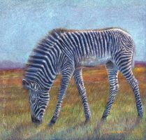 Zebra Foal by sschukina