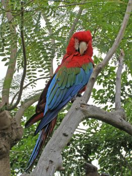Enhanced Scarlet Macaw by Nerdiphied