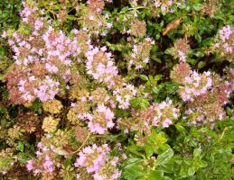 Round pink flower bunches by Ripplin