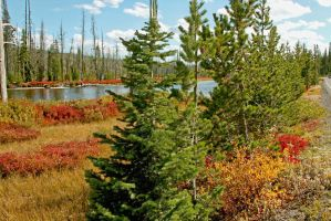 Yellowstone Riverbank Colors by Kippenwolf
