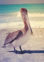 Pelican by JunnyPhotography