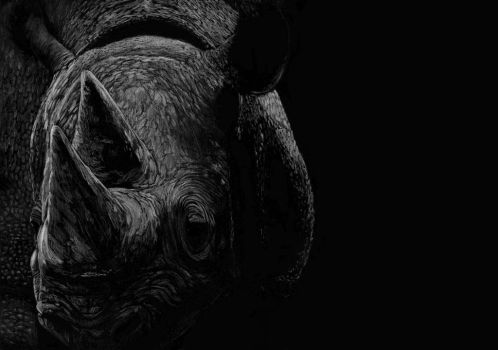 Rhinoceros by ferencfile