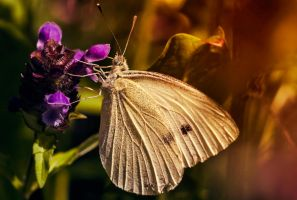 white butterfly by mephisto23