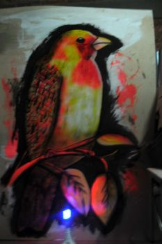 Total 1st practice with aerosols and 1st Bird by Johnny-Aza