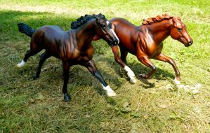 Racing Royalties by Breyer-Photographer