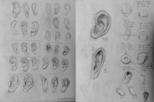 Artist Workout 19: Ear Study by whoopzdaisy