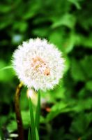 make a wish.. by picturework-memory