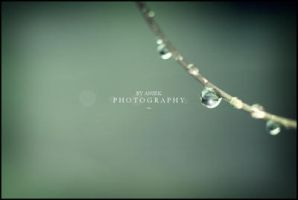 Raindrops II by AniekPhotography