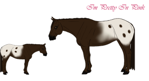 Im Pretty In Pink Ref. - For Sale by Cerulean-Sky-Stables
