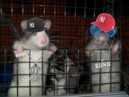 Gangsta Rats by Ulla-Andy