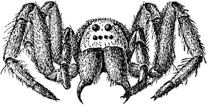 Giant spider line art stock by IHCOYC