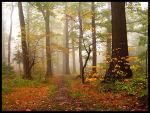 Autumn forest 2 by mjagiellicz