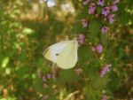 Butterfly. by pate121