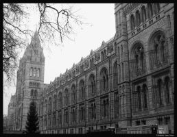 British Natural History Museum by Lilith1985