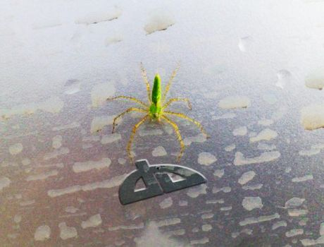 Green spider by rustyblood