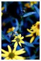 Little Yellow in Big Blue by MakesMeLaugh