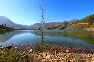 Tree in Lake by JussyD